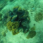 Cairns : Great Barrier Reef 10