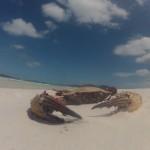 WhiteHaven Beach - On the beach - 06