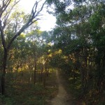 Rainbow beach : bushwalk to Carlos Sandblow 03