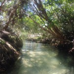 Fraser Island : creek pur water - 03