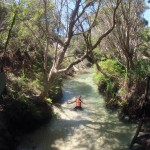 Fraser Island : creek pur water - 02