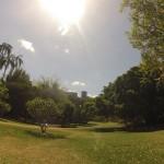 Brisbane : Botanic garden - 02