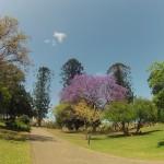Brisbane : Botanic garden - 03