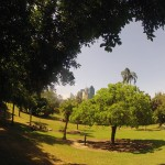 Brisbane : Botanic garden - 04