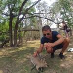 Brisbane - Lone Pine Koala Sanctuary - 12