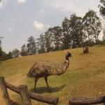 Brisbane - Lone Pine Koala Sanctuary - 13