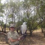 Brisbane - Lone Pine Koala Sanctuary - 15