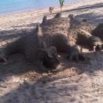 Airlie Beach : Le beau pâté de sable