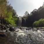 Waterfalls Way - Dorrigo NP - Dangar falls - 03