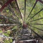 Blue Mountains : Wenworth Falls - 15