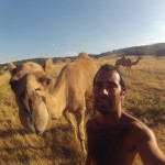 Lost Patrol Camels Farm : Camel 04