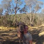 Lost Patrol Camels Farm : Camel 07