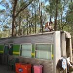 Lost Patrol Camels Farm : Camp 15
