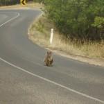 Great Ocean Road - Cape Otway - 05