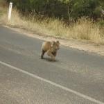 Great Ocean Road - Cape Otway - 06