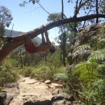 The Grampians National Park - On the walkway to Pinnacle - 03