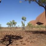Uluru / Ayers Rock : Bushway - 05
