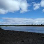 Phillip Island : Rhyll Inlet Mangrove - 01