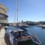Adelaide - Dolphins : Boat - 02