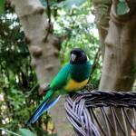 Deisen Landscape : Parrot