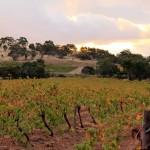 Deisen Landscape : Vineyard - 01