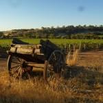Deisen Landscape : Vineyard - 02