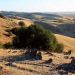 Barossa Valley : Lookout - 02