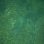 Ningaloo Reef : 04