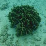 Ningaloo Reef : 10