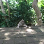 Uluwatu Temple : Monkeys - 01