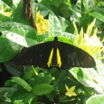 Bali : Butterfly Park - 03