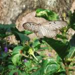 Bali : Butterfly Park - 04