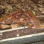 Bali : Butterfly Park - 08