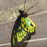 Bali : Butterfly Park - 09