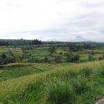Bali : Jatiluwih - 02
