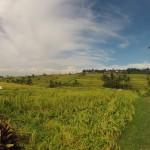 Bali : Jatiluwih - 04