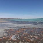 Stromatolites - 02