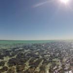 Stromatolites - 05