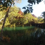 Karajini : Dales Gorge - Fern pool - 01