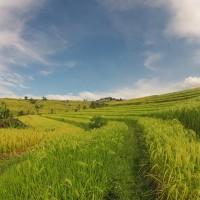 Bali : Jatiluwih - 08