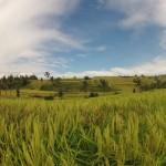 Bali : Jatiluwih - 10