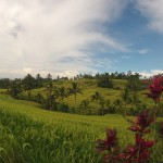 Bali : Jatiluwih - 12