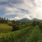 Bali : Jatiluwih - 13