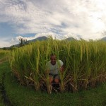 Bali : Jatiluwih - 14