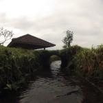 Bali : Jatiluwih - 15